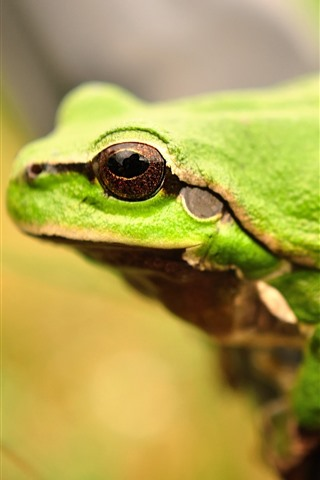 iPhone Wallpaper Green frog, eye, hazy
