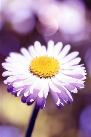 iPhone Wallpaper Light pink daisy close-up, petals, light circles