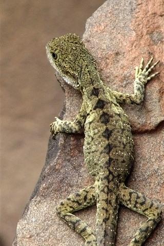 iPhone Wallpaper Lizard, rock