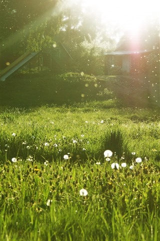 iPhone Wallpaper Meadow, white flowers, trees, green, sun rays, glare