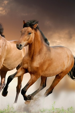 iPhone Wallpaper Two brown horses running, speed