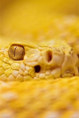 iPhone Wallpaper Yellow rattlesnake, eye, look