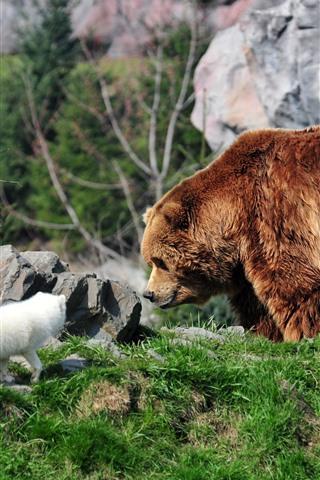 iPhone Wallpaper Brown bear and arctic fox