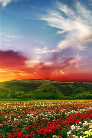 iPhone Wallpaper Colorful flowers, flower field, mountain, sunset, clouds