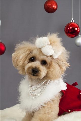 iPhone Papéis de Parede Cachorro fofo e bolas de natal