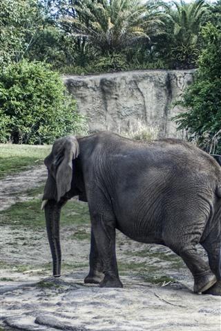 iPhone Wallpaper Elephant walk, trees
