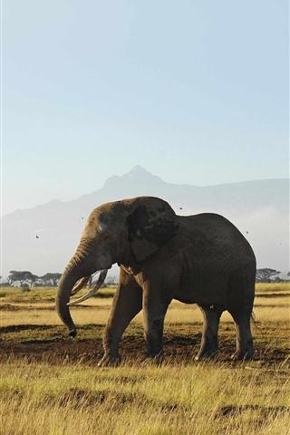 iPhone Wallpaper Elephants, grassland, trees, mountain