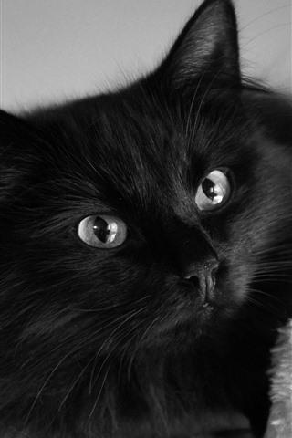 iPhone Papéis de Parede Gato preto fofo, olhos, olhar