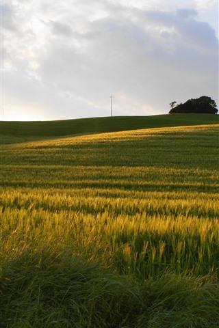 iPhone Wallpaper Green fields, trees, power lines, sunlight