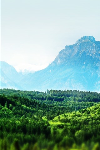 iPhone Wallpaper Mountains, green, forest, nature scenery