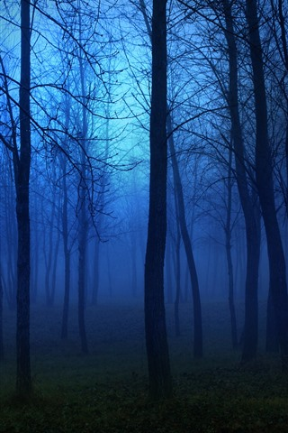 iPhone Wallpaper Night, forest, trees, fog