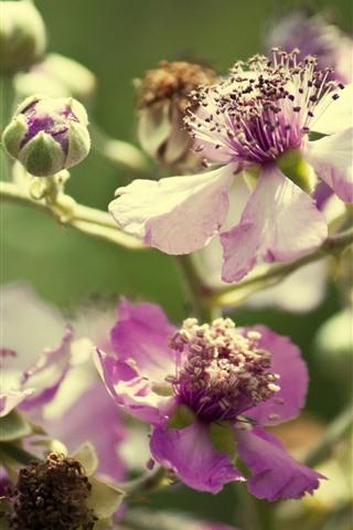 iPhone Papéis de Parede Flores silvestres rosa, caule, nebuloso