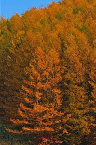 iPhone Papéis de Parede Árvores, cerca, outono, ouro