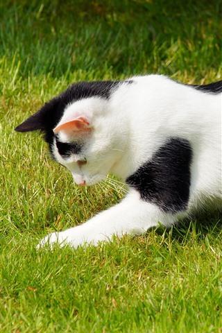 iPhone Wallpaper Cat playful on grass