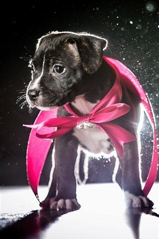 iPhone Wallpaper Cute puppy, backlight, glare, shadow