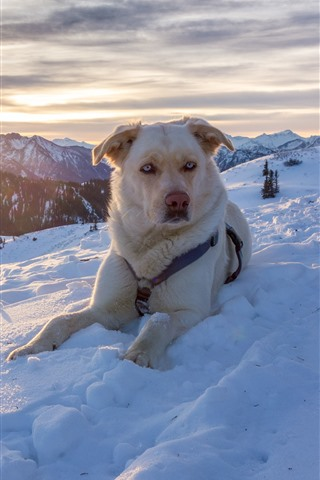 iPhone Wallpaper Dog in winter, snow, mountains, sunset