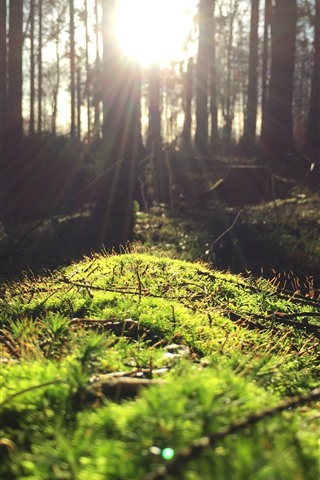 iPhone Wallpaper Forest, moss, green, sun rays, glare