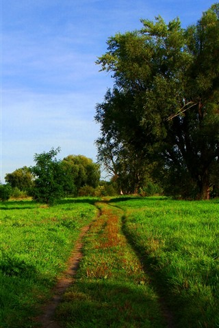 iPhone Wallpaper Green field, trees, path, nature scenery