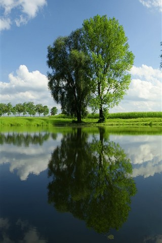 iPhone Wallpaper Green trees, pond, water reflection, summer