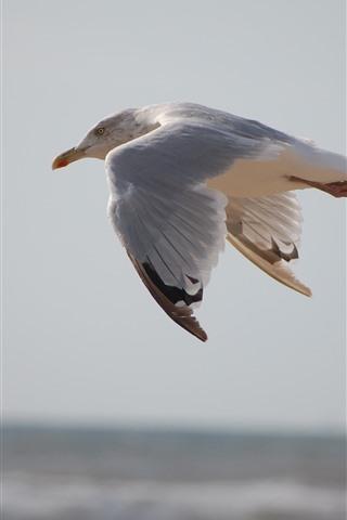 iPhone Wallpaper Seagull flight, bird close-up