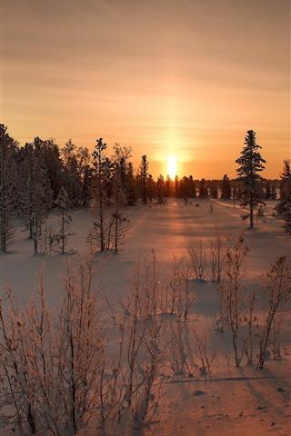 iPhone Wallpaper Sunset, snow, trees, winter, dusk