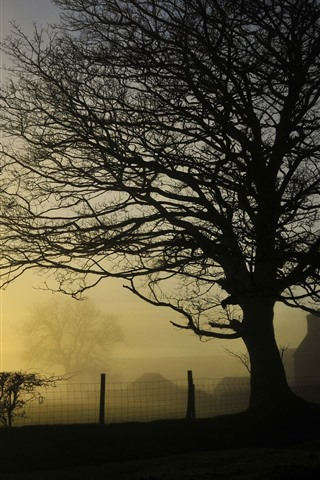 iPhone Wallpaper Trees, fence, village, sunrise, fog, morning