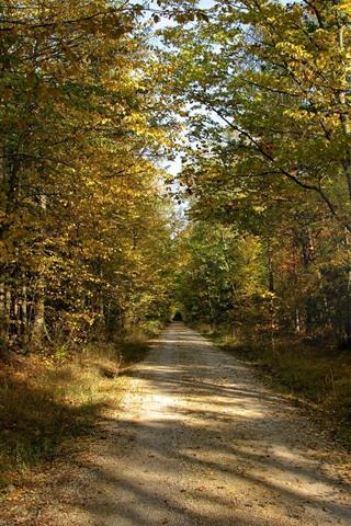iPhone Wallpaper Trees, path, autumn, sun rays