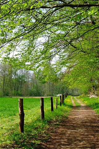 iPhone Papéis de Parede Árvores, caminho, cerca, campos, verde