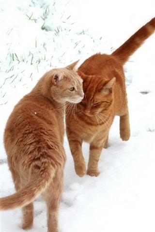 iPhone Wallpaper Two orange cats, white snow, winter