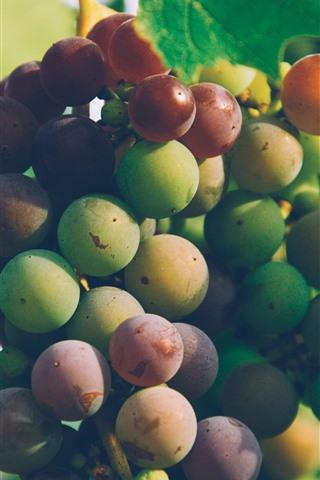 iPhone Wallpaper Vine, leaves, fresh grapes, fruit