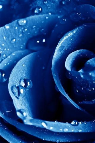 iPhoneの壁紙 青いバラのマクロ撮影、花びら、水滴