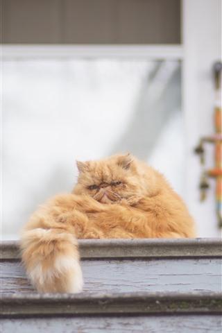 iPhone Wallpaper Cat rest, tail, ladder
