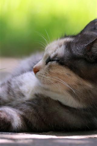 iPhone Wallpaper Cat sleeping, green grass, hazy