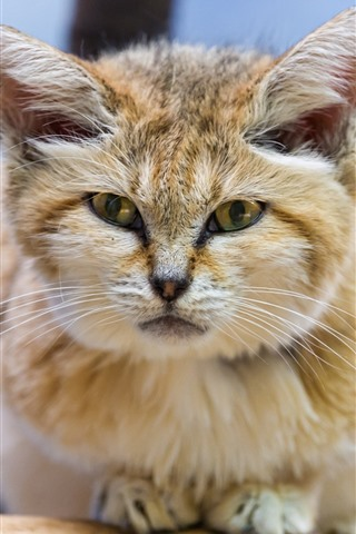 iPhone Wallpaper Cute furry kitten, front view, tree
