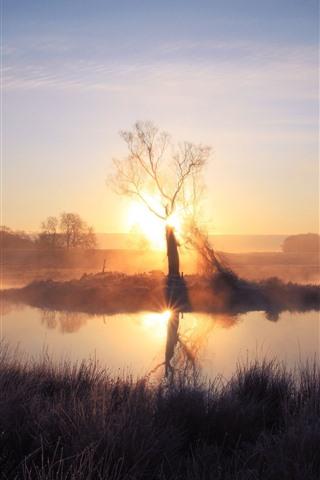 iPhone Fond d'écran Matin, arbre, lever de soleil, étang, brouillard, herbe