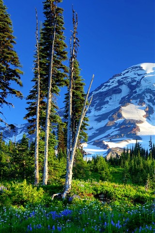 iPhone Wallpaper Mount Rainier, mountains, trees, green, snow, flowers, USA