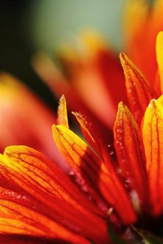 iPhone Wallpaper Orange flower close-up, petals, hazy