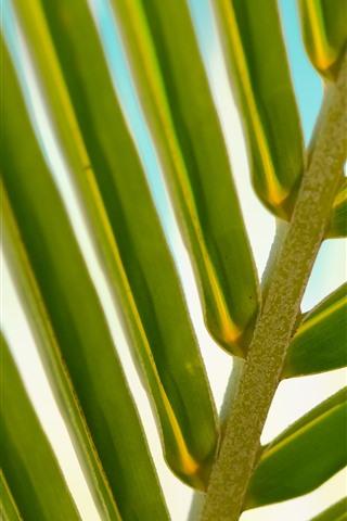 iPhone Wallpaper Palm leaf macro photography, green, stem