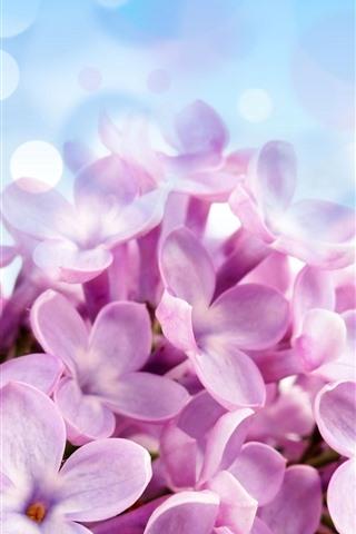 iPhoneの壁紙 ピンクのライラックの花のクローズアップ、花びら、明るい円