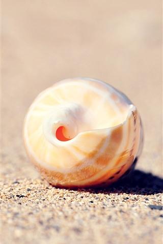 iPhoneの壁紙 貝殻、砂、静物
