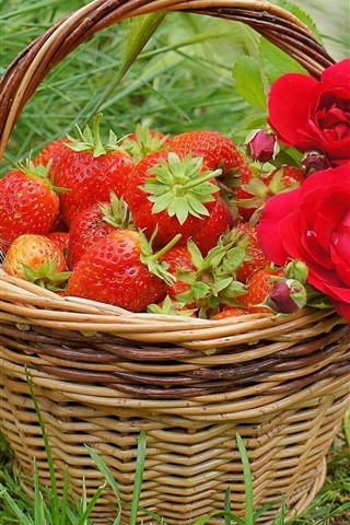iPhone Wallpaper Basket, red roses, strawberry