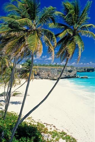 iPhone Wallpaper Beach, palm trees, sea, tropical scenery