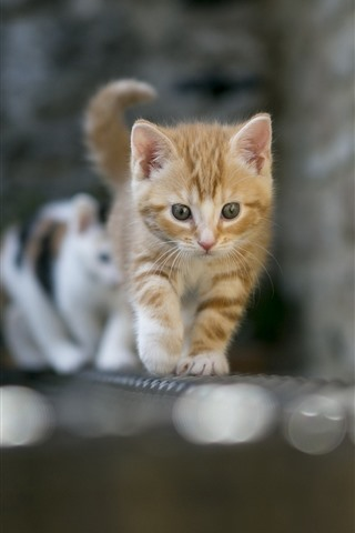 iPhone Wallpaper Cats walking, front view, bricks, wall