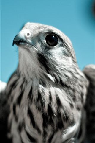 iPhone Wallpaper Eagle, beak, eyes, wings, look