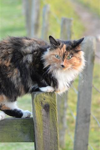 iPhone Wallpaper Furry cat, fence, look, hazy