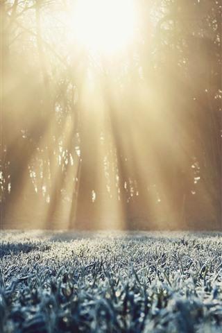 iPhone Wallpaper Grass, frost, trees, sun rays, winter