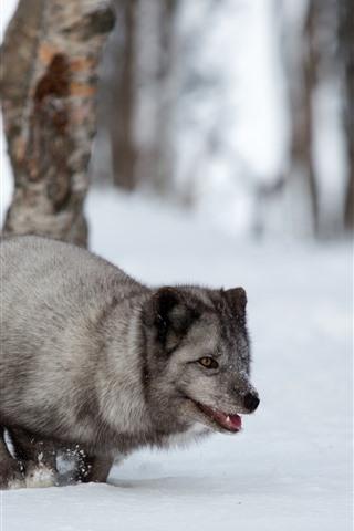 iPhone Wallpaper Gray fox, snow, trees, winter