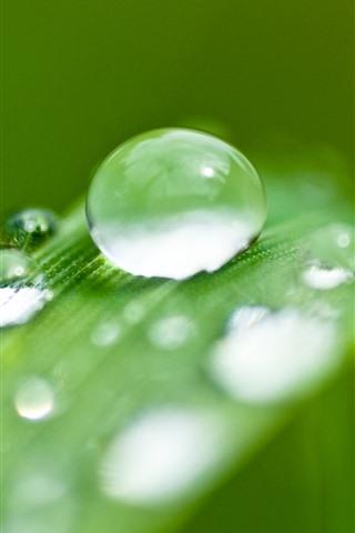 iPhone Wallpaper Green grass leaf, water droplets, dew