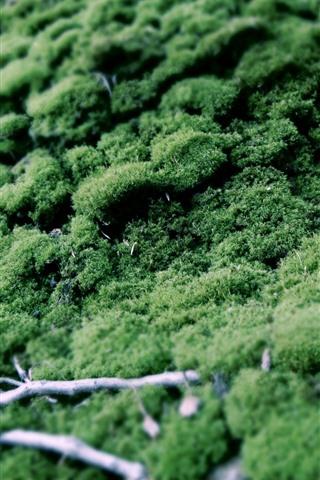 iPhone Wallpaper Green grass, moss, hazy