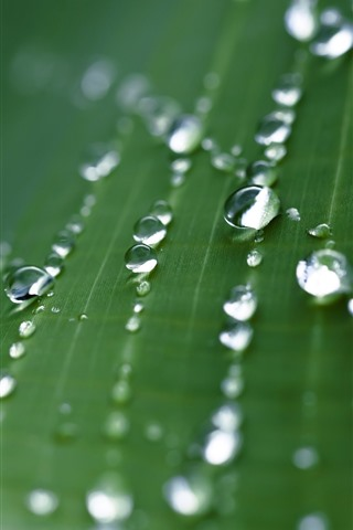 iPhone Wallpaper Green leaf macro photography, many water droplets